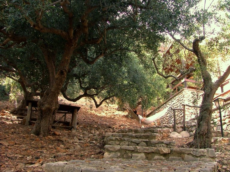 The house in the olive grove
