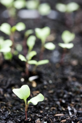 Jane Powers shares the secrets of super-successful soil. in the new issue of Garden Heaven magazine
