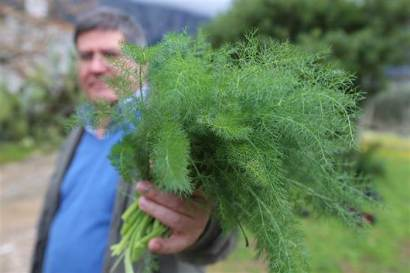 fennel_living_to_100-streams_desktop_large_f4b43ba562ca3a841afc8cbc0095bde3.today-inline-large